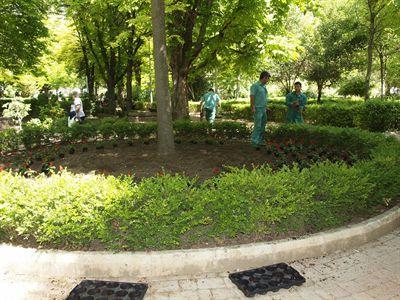 Comienza la plantaci n de m s de flores y arbustos for Arbustos en jardines